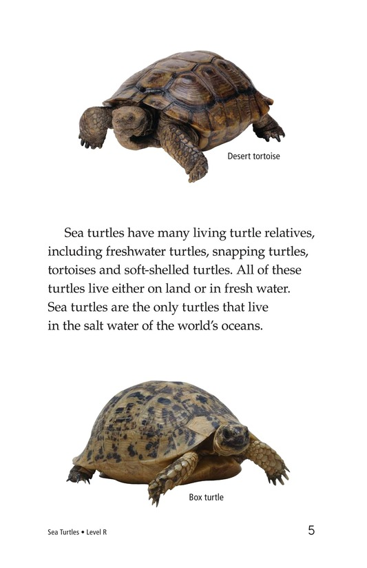 Book Preview For Sea Turtles Page 5