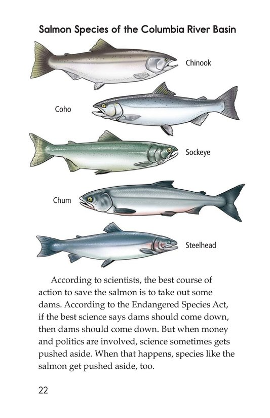 Book Preview For Saving the Salmon Page 22