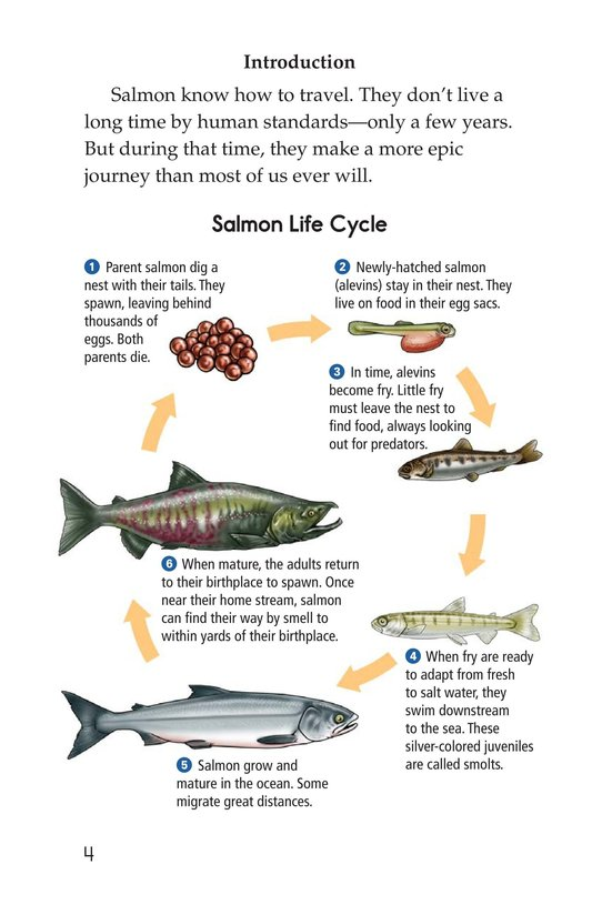 Book Preview For Saving the Salmon Page 4