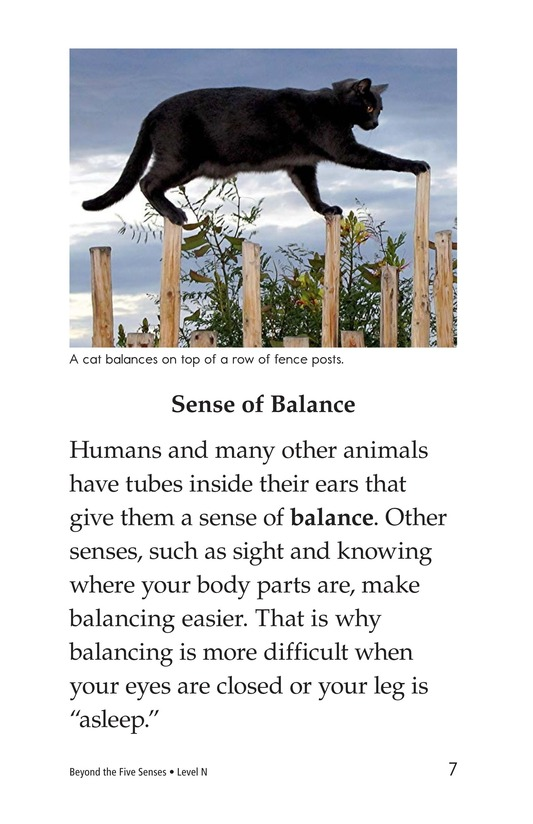 Book Preview For Beyond the Five Senses Page 7