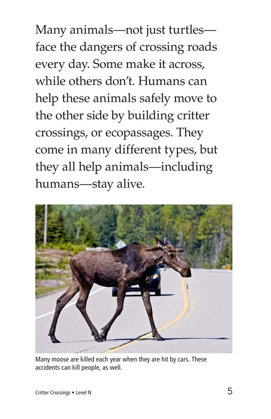 Book Preview For Critter Crossings Page 5