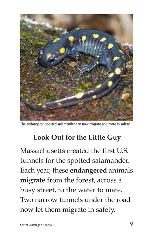 Book Preview For Critter Crossings Page 9