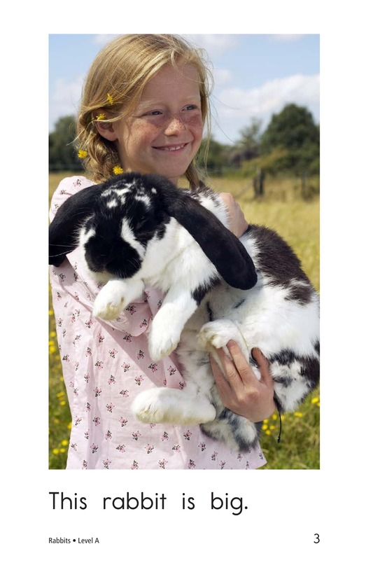 Book Preview For Rabbits Page 3