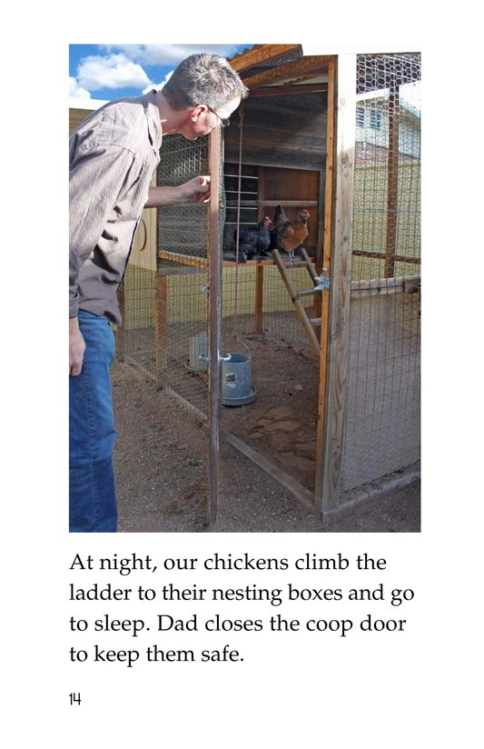 Book Preview For Chickens in My Backyard Page 14