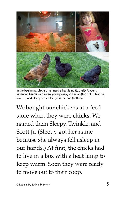 Book Preview For Chickens in My Backyard Page 5