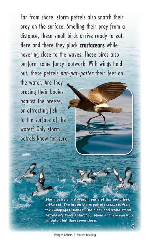 Book Preview For Winged Fishers Page 9