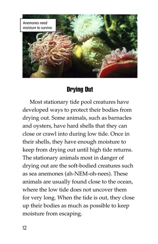 Book Preview For Exploring Tide Pools Page 12
