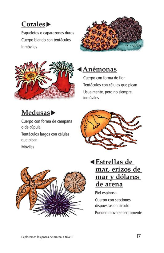 Book Preview For Exploring Tide Pools Page 17