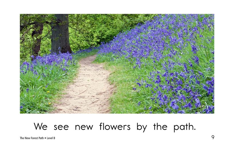 Book Preview For The New Forest Path Page 9