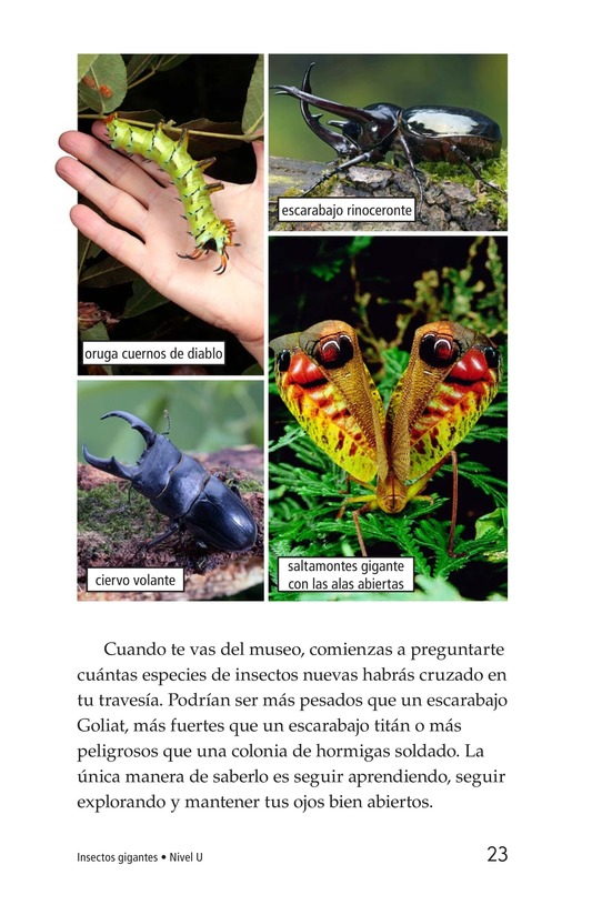 Book Preview For Giant Insects Page 23