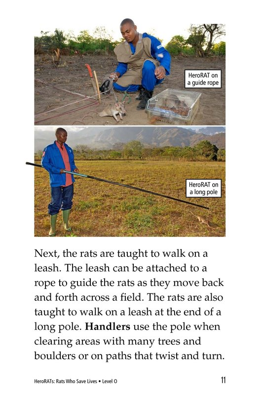 Book Preview For HeroRATs: Rats Who Save Lives Page 11