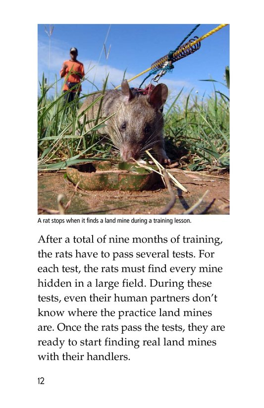 Book Preview For HeroRATs: Rats Who Save Lives Page 12