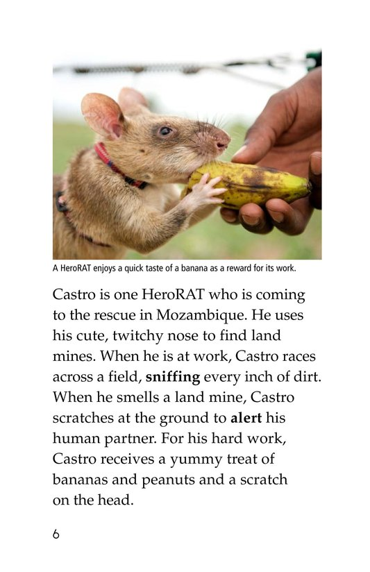 Book Preview For HeroRATs: Rats Who Save Lives Page 6