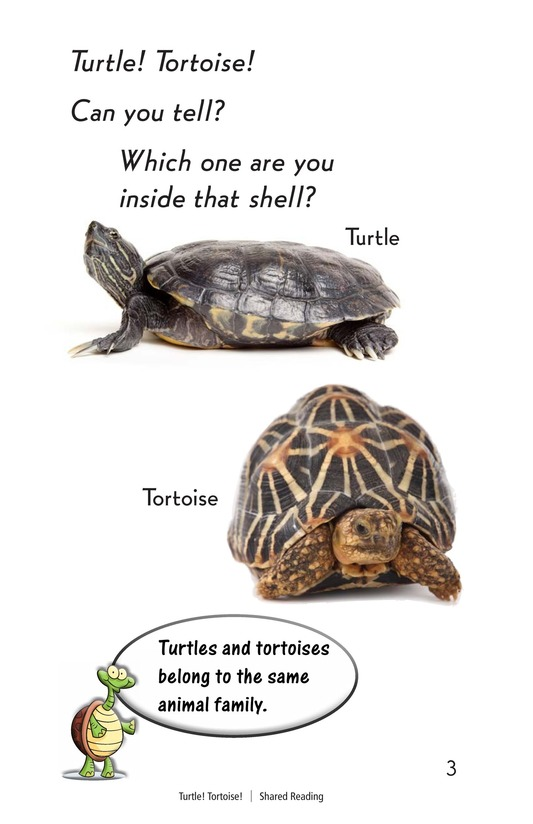 Book Preview For Turtle! Tortoise! Page 3