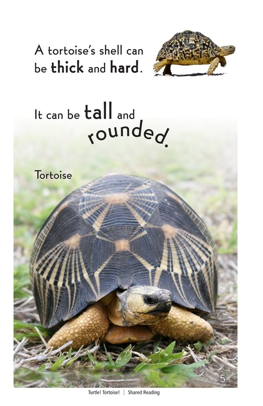 Book Preview For Turtle! Tortoise! Page 5