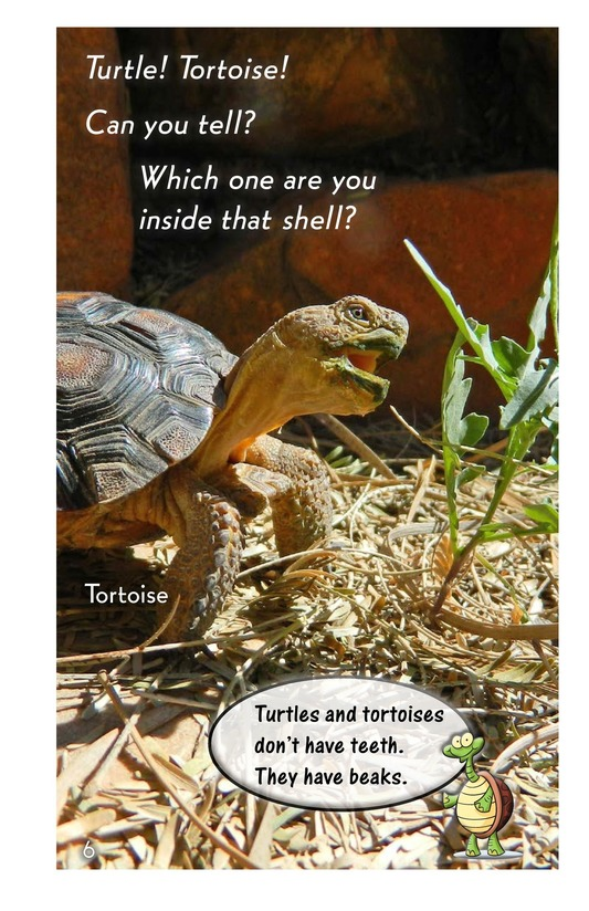 Book Preview For Turtle! Tortoise! Page 6