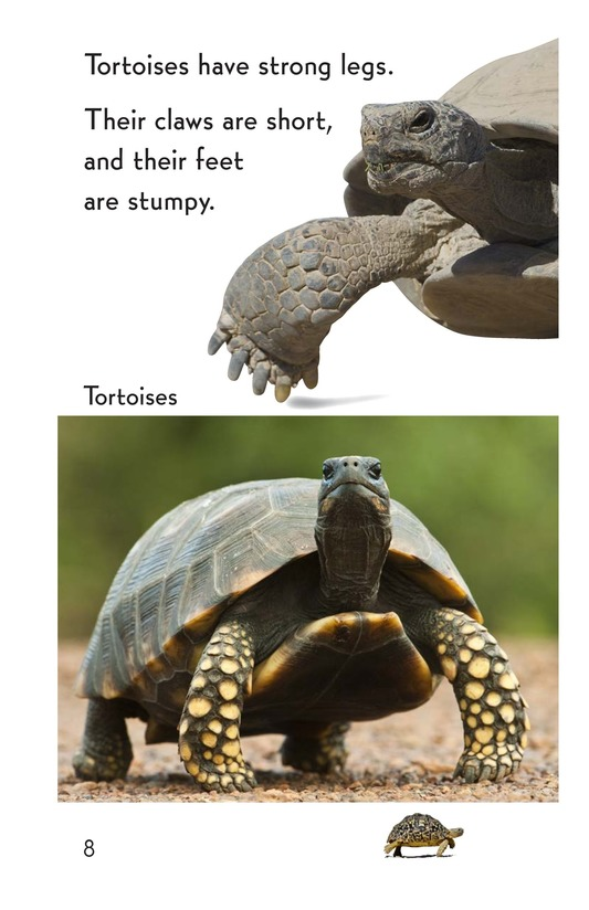 Book Preview For Turtle! Tortoise! Page 8
