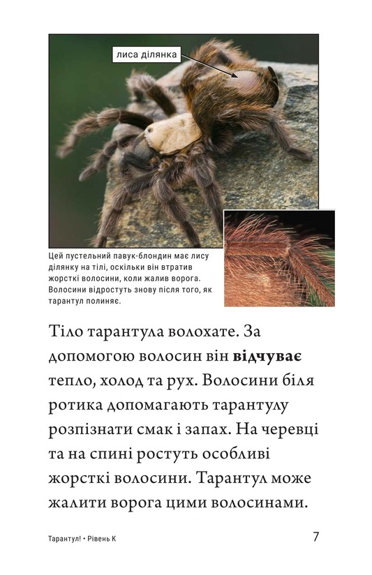 Book Preview For Tarantula! Page 7