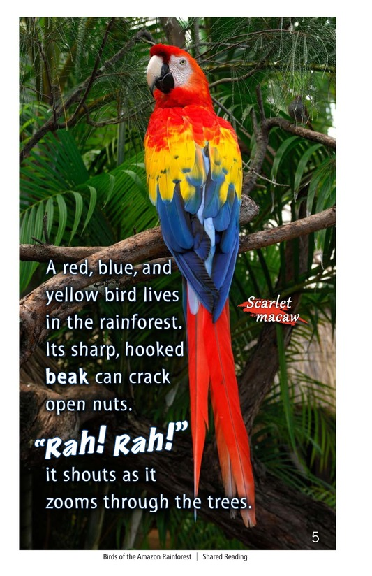 Book Preview For Birds of the Amazon Rainforest Page 5
