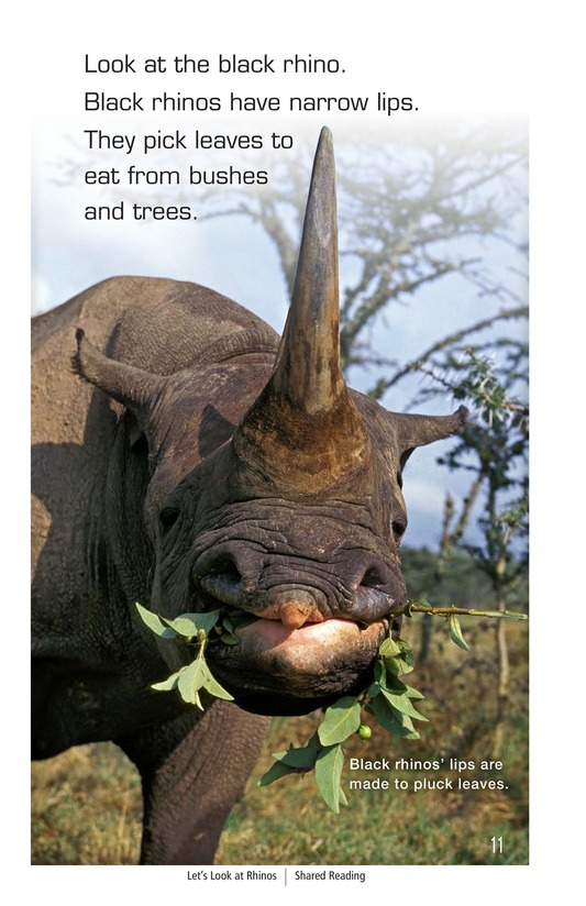 Book Preview For Let's Look at Rhinos Page 11