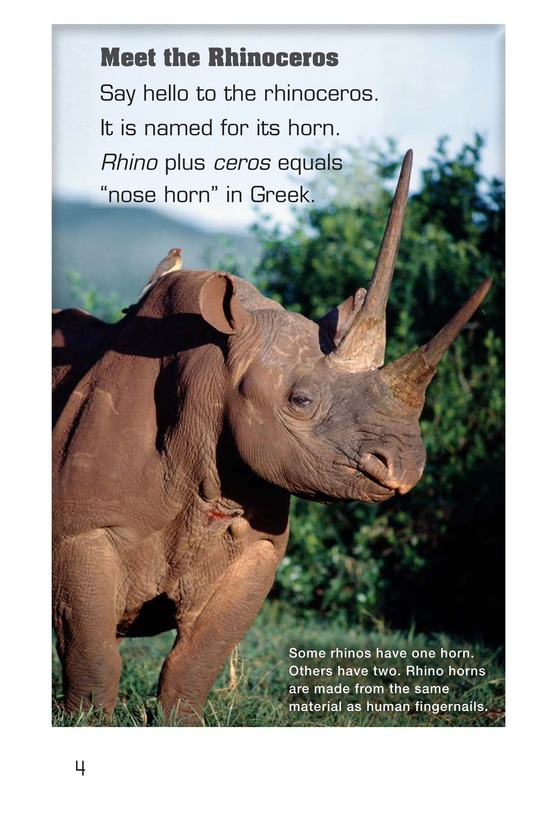 Book Preview For Let's Look at Rhinos Page 4