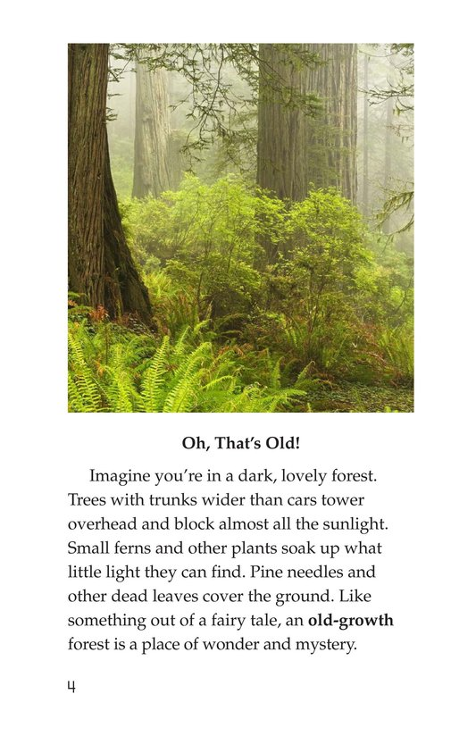 Book Preview For Woods of Wonder Page 4