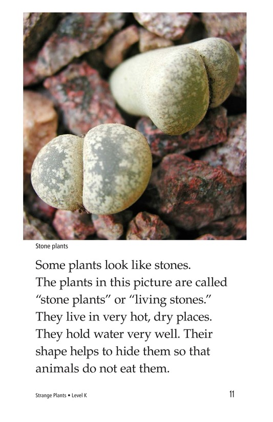 Book Preview For Strange Plants Page 11