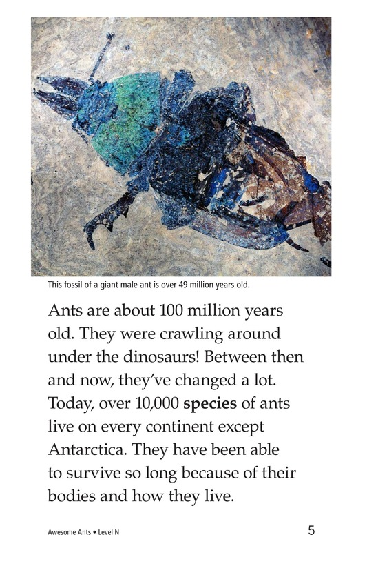 Book Preview For Awesome Ants Page 5
