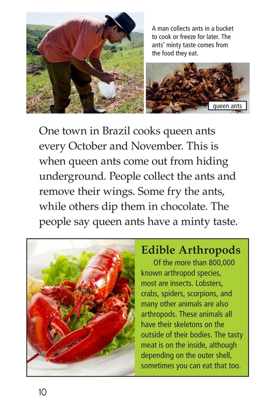 Book Preview For Edible Bugs Page 10