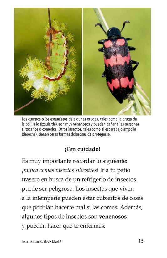 Book Preview For Edible Bugs Page 13