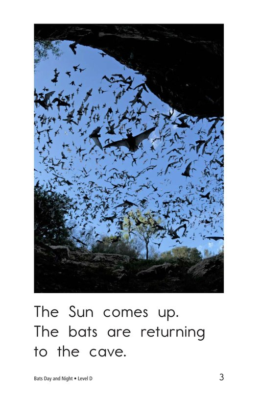Book Preview For Bats Day and Night Page 3