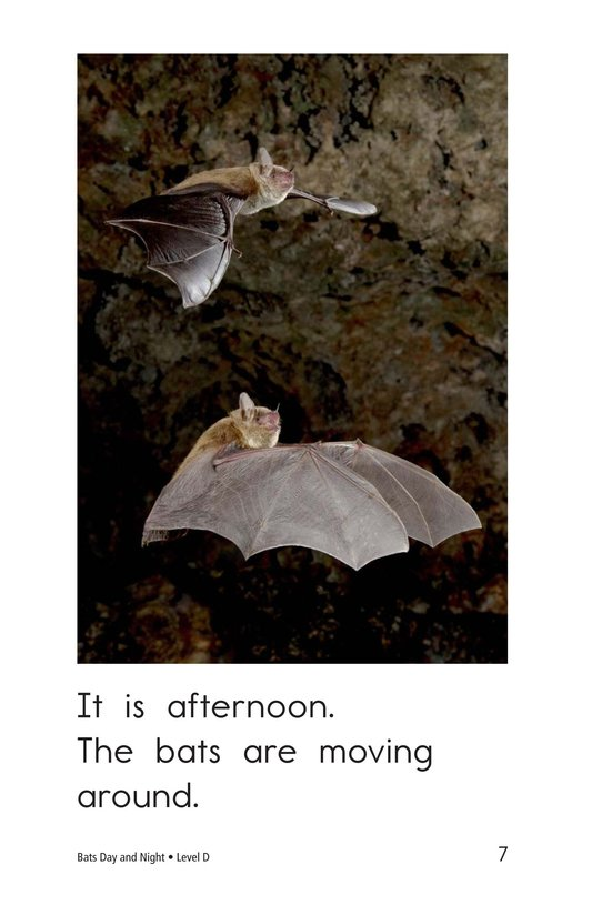 Book Preview For Bats Day and Night Page 7