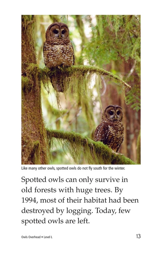 Book Preview For Owls Overhead Page 13
