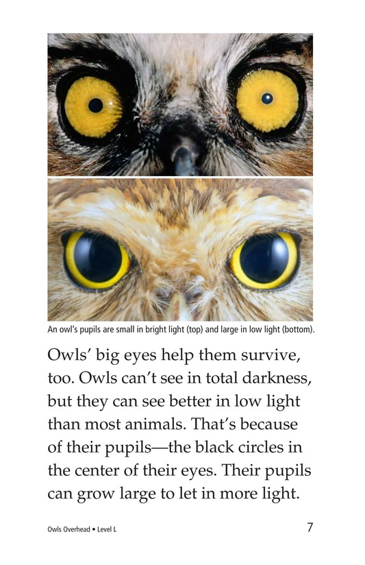 Book Preview For Owls Overhead Page 7