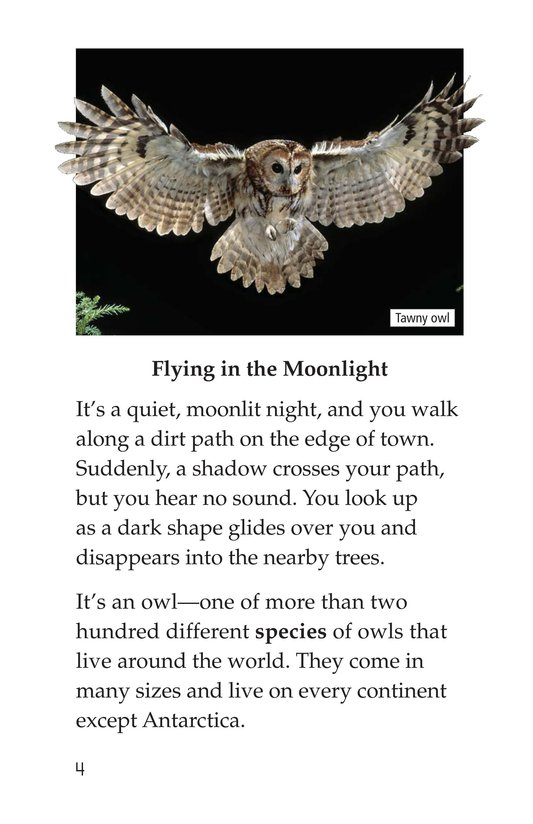 Book Preview For Owls Overhead Page 4