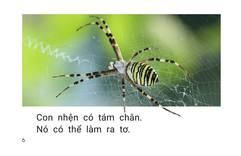 Book Preview For All About Spiders Page 6