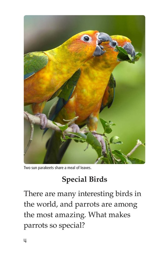 Book Preview For Parrots Page 4