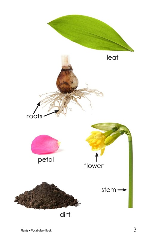 Book Preview For Plants Page 3