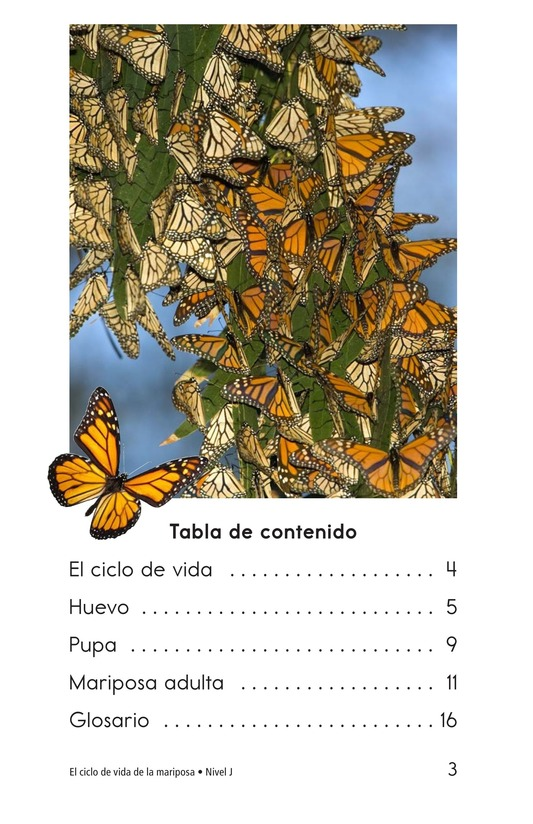 Book Preview For The Butterfly Life Cycle Page 3