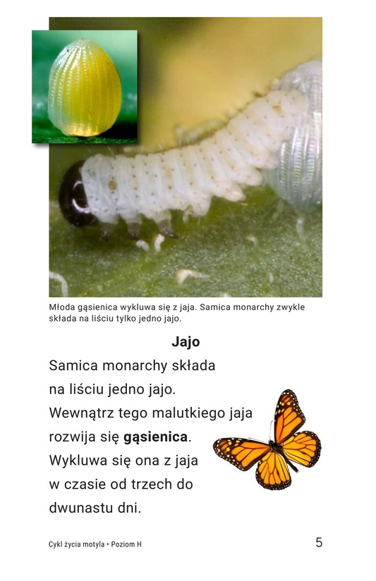 Book Preview For The Butterfly Life Cycle Page 5