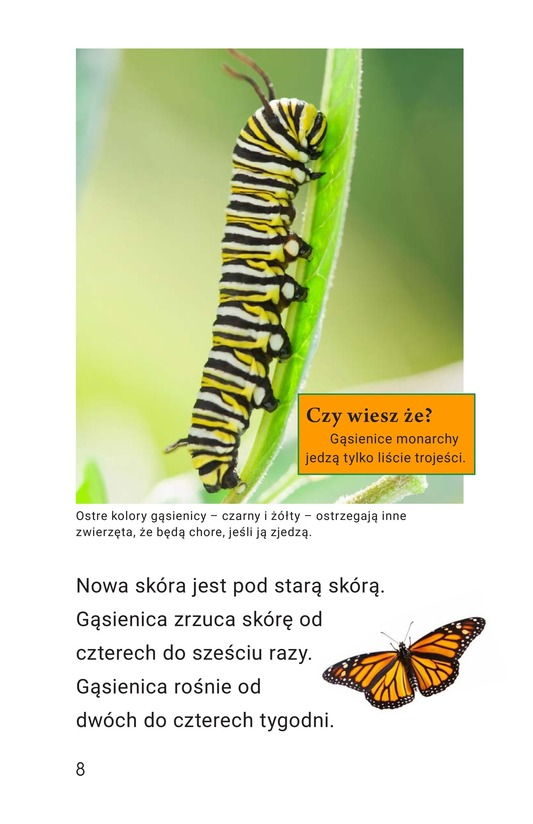 Book Preview For The Butterfly Life Cycle Page 8
