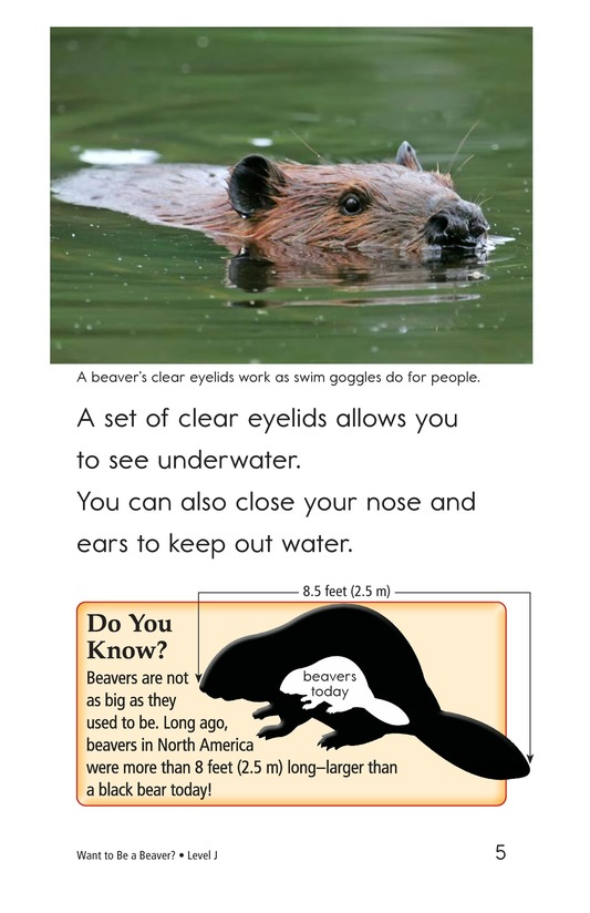 Book Preview For Want to Be a Beaver? Page 5