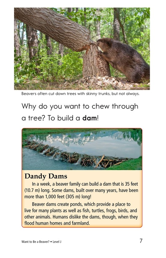 Book Preview For Want to Be a Beaver? Page 7
