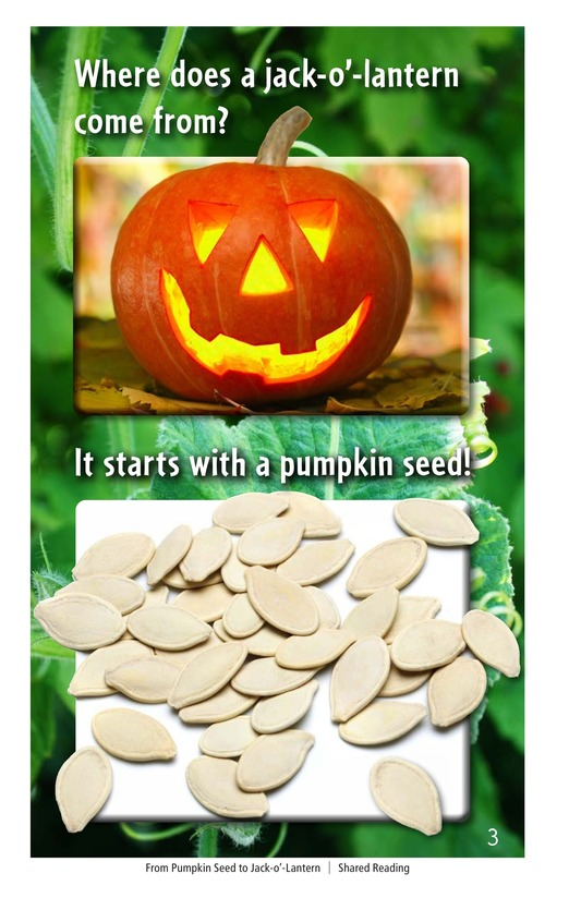 Book Preview For From Pumpkin Seed to Jack-o'-Lantern Page 3