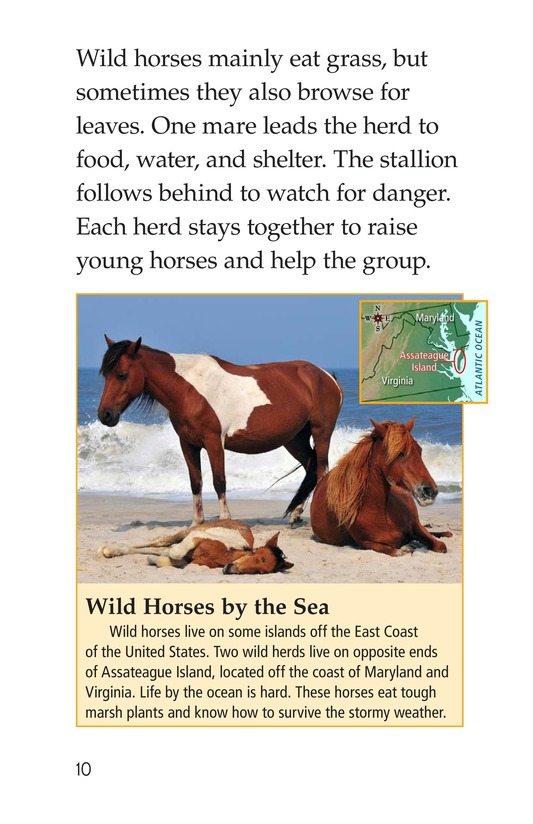 Book Preview For Wild Horses Page 10
