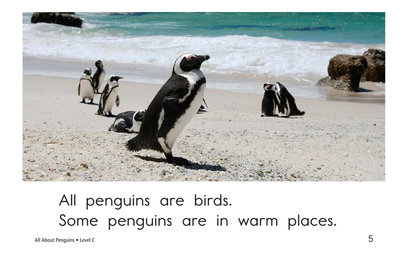 Book Preview For All About Penguins Page 5