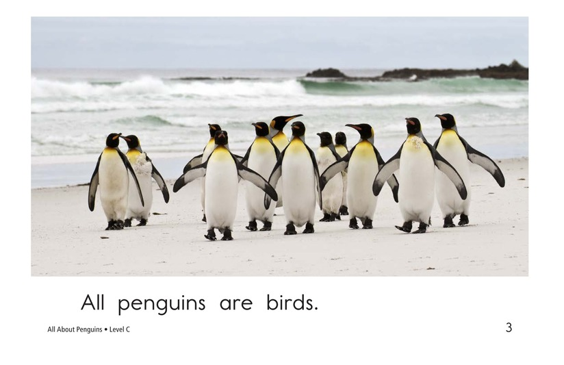 Book Preview For All About Penguins Page 3