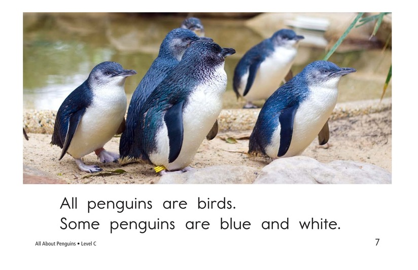 Book Preview For All About Penguins Page 7