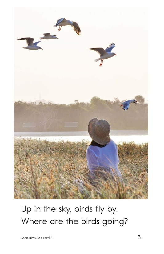 Book Preview For Some Birds Go Page 3