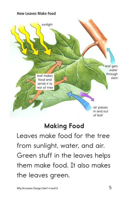 Book Preview For Why Do Leaves Change Color? Page 5